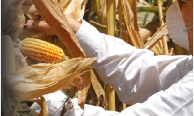 Precios, producción y seguridad alimentaria