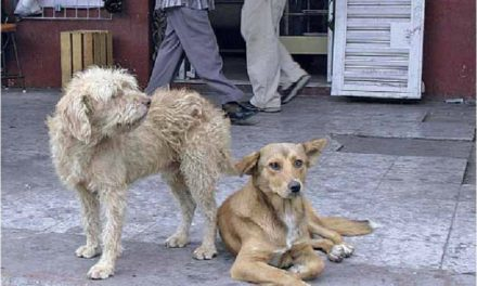 Perros callejeros: problemas de salud pública
