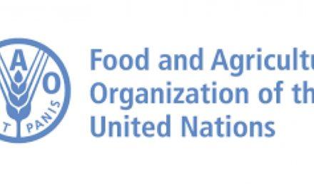 FAO y OIM presidirán grupo mundial sobre migración