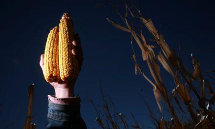 Urge invertir en áreas rurales para salir de la pobreza: FAO