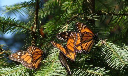 Proteger la biodiversidad, para no desaparecer