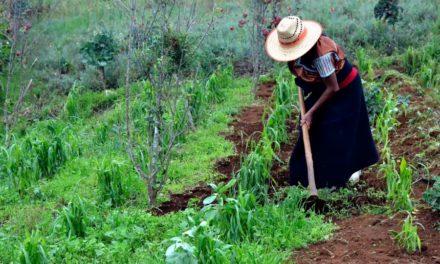 México, potencia agroalimentaria con mexicanos hambrientos