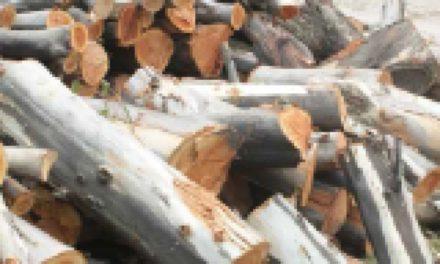 La deforestación en México