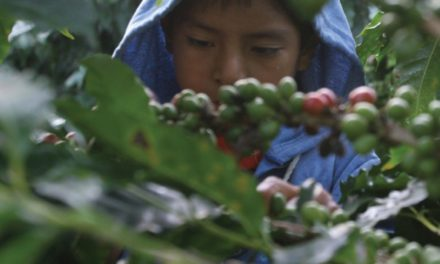 Trabajo infantil en Chiapas, del discurso a la acción
