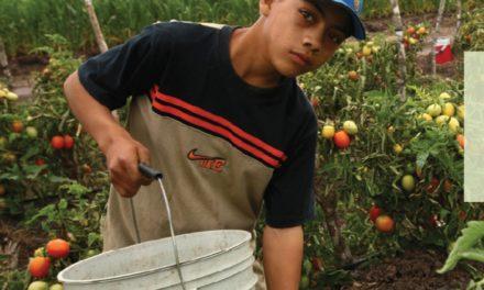 Eliminar el trabajo infantil para reducir el hambre