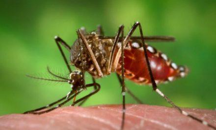 ¿Qué pasa con el dengue?