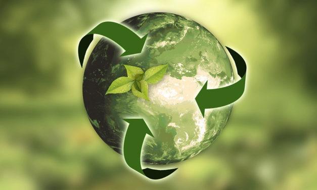 Ecología en fragmentos: todo está relacionado