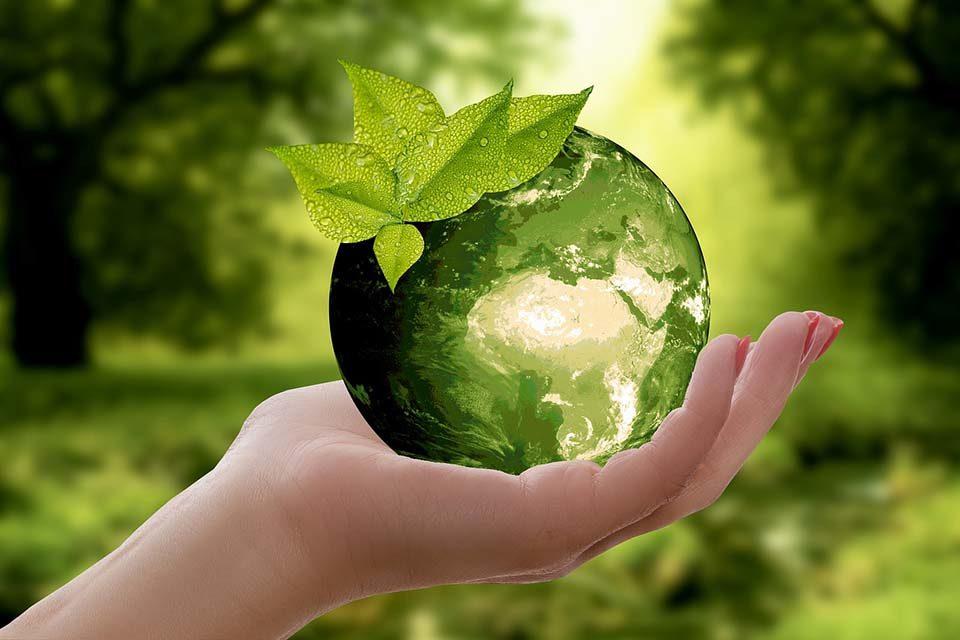 Medio ambiente: garantizar el futuro de la vida y de la Tierra