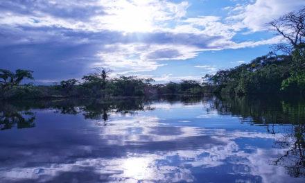 La Amazonia: bien común de la Tierra y de la humanidad