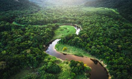 El futuro de la humanidad y de la Tierra está ligado a la Amazonia | Entrevista a Leonardo Boff