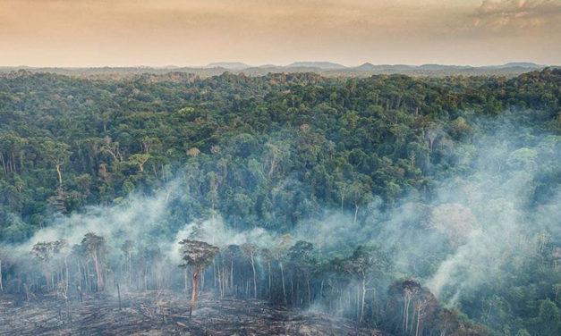 Brevísima relación de la destrucción de las Indias brasileñas