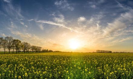 Cuidar de la Madre Tierra y amar a todos los seres