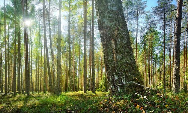 Debemos plantar 4 mil millones de árboles al año en la próxima década
