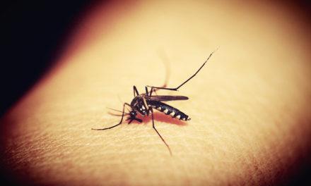 Los casos de dengue en América Latina superaron los 3 millones en 2019
