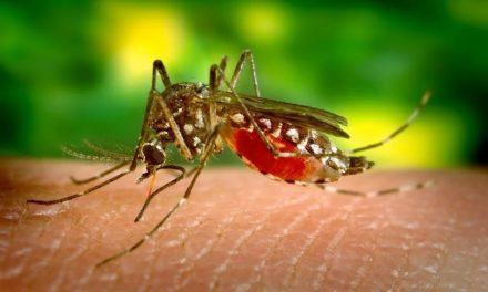 Por si no fuera poco, resurge el dengue