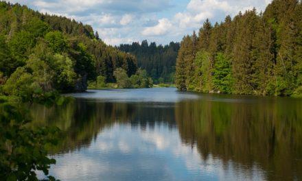 Una Transición ecológica hacia una sociedad biocentrada (II)
