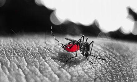 Además de la COVID19 el dengue ya está aquí